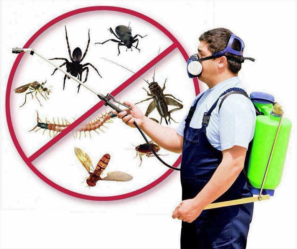 Fresh Pest Control & Cleaning Services